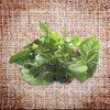 Herb Salad Mix